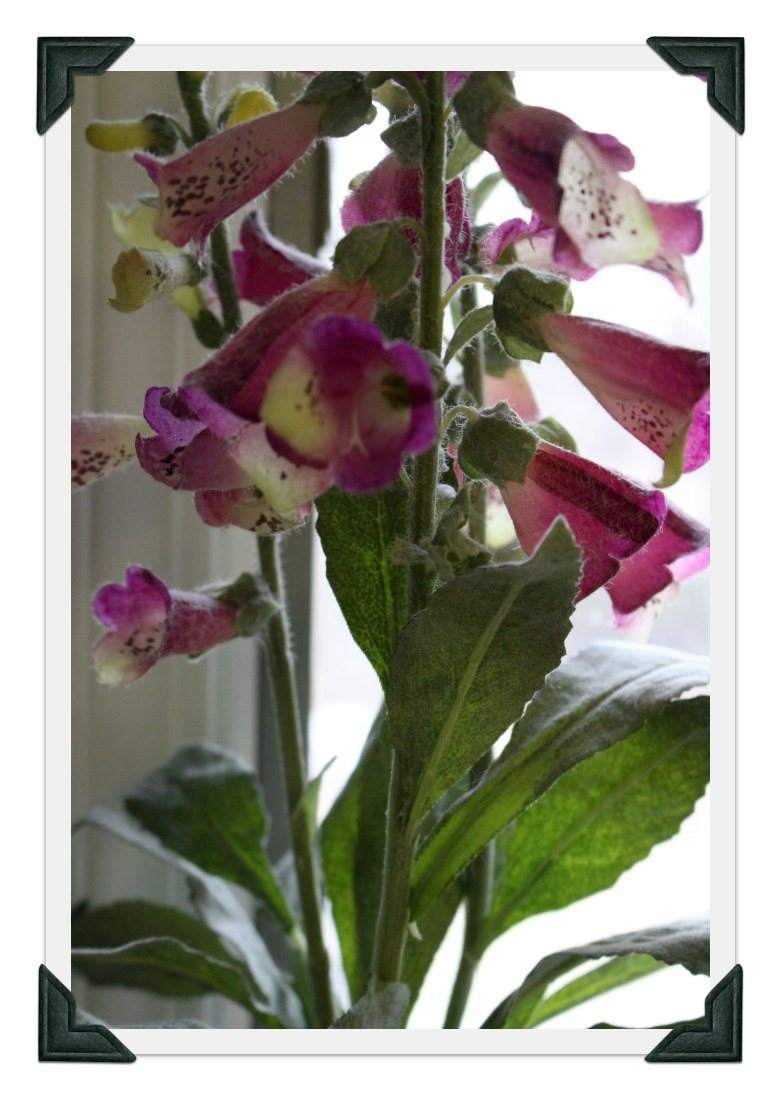 Foxglove in Easter pink