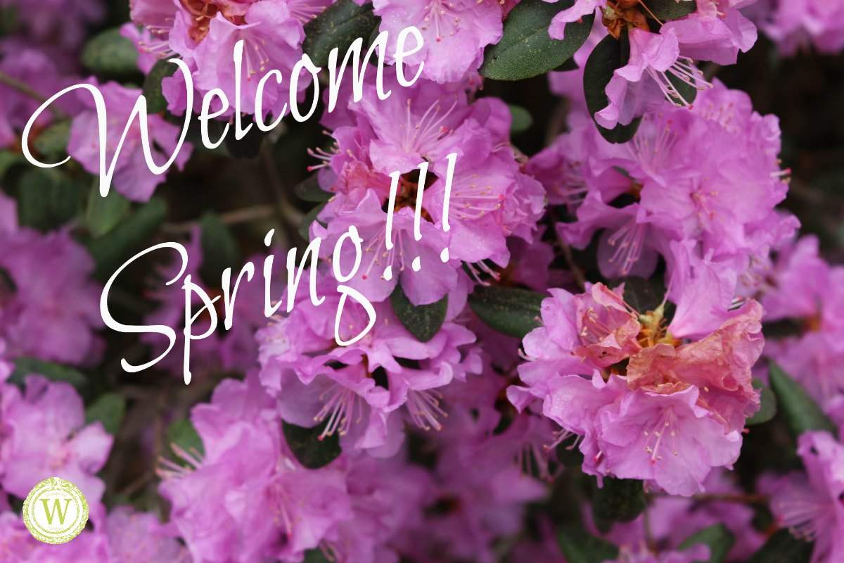 Welcome Spring And Wild Wanderings Designing Wilder